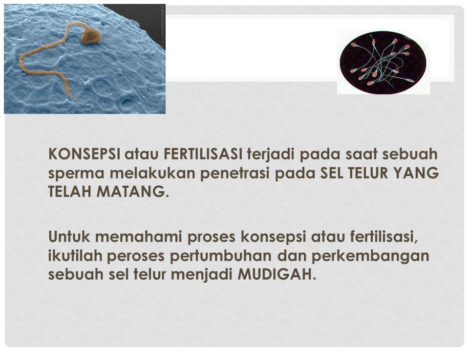 KONSEPSI atau FERTILISASI terjadi pada saat sebuah sperma melakukan penetrasi pada SEL TELUR YANG TELAH MATANG. Untuk memahami proses konsepsi atau fe