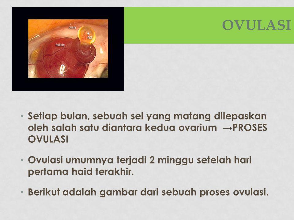 OVULASI Setiap bulan, sebuah sel yang matang dilepaskan oleh salah satu diantara kedua ovarium →PROSES OVULASI Ovulasi umumnya terjadi 2 minggu setela