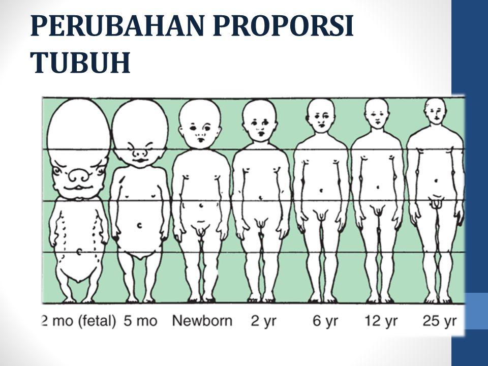 PERUBAHAN PROPORSI TUBUH