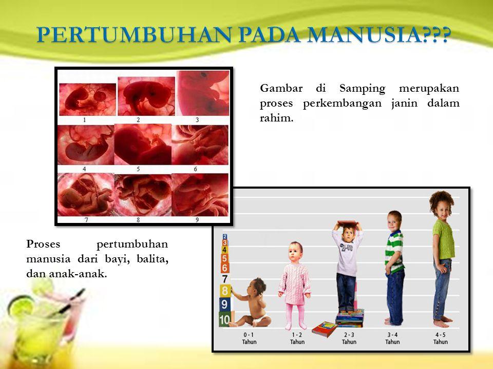 Gambar di Samping merupakan proses perkembangan janin dalam rahim.