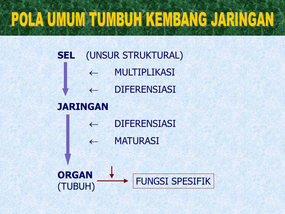 3 SEL (UNSUR STRUKTURAL)  MULTIPLIKASI  DIFERENSIASI JARINGAN  DIFERENSIASI  MATURASI ORGAN (TUBUH) FUNGSI SPESIFIK