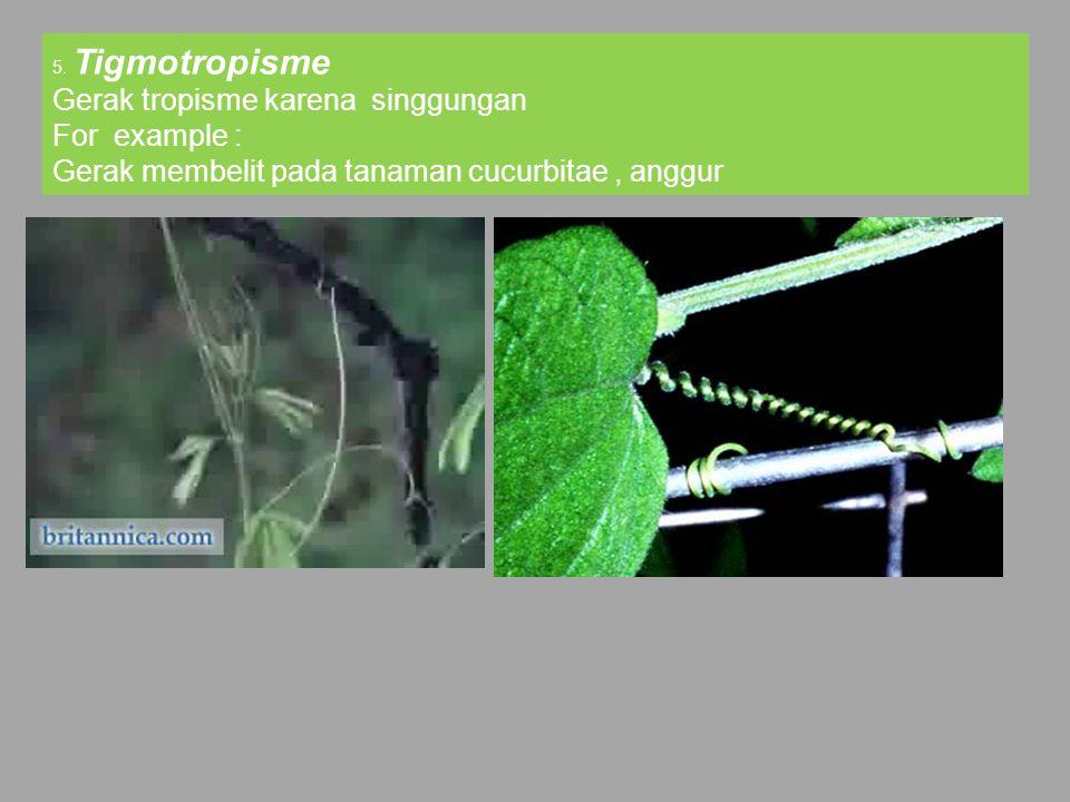 5. Tigmotropisme Gerak tropisme karena singgungan For example : Gerak membelit pada tanaman cucurbitae, anggur