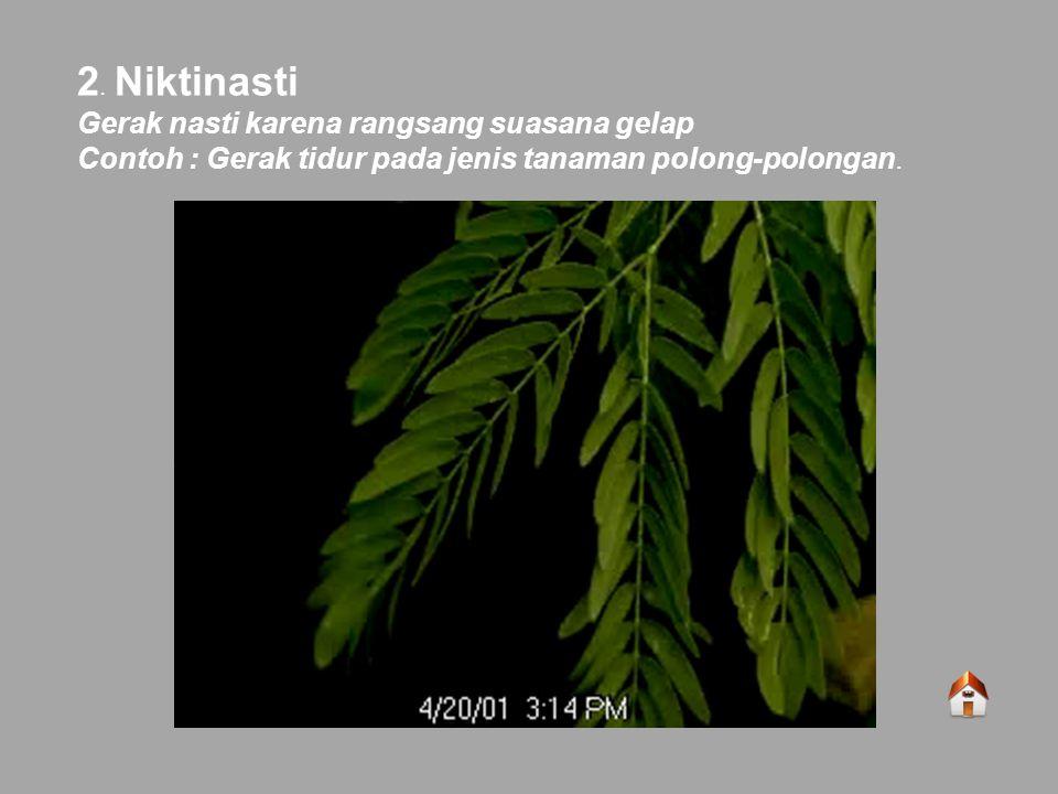 2. Niktinasti Gerak nasti karena rangsang suasana gelap Contoh : Gerak tidur pada jenis tanaman polong-polongan.