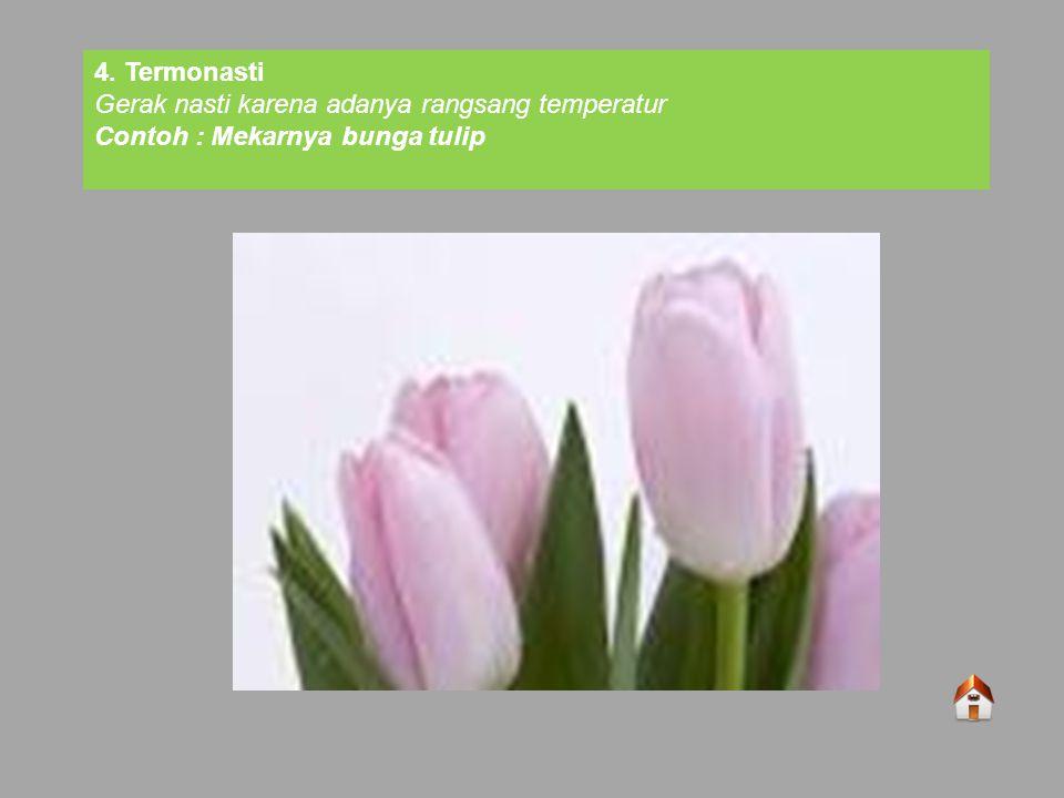 4. Termonasti Gerak nasti karena adanya rangsang temperatur Contoh : Mekarnya bunga tulip