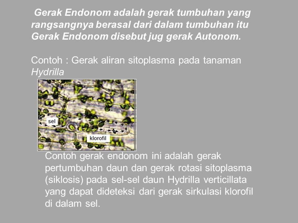 Gerak Endonom adalah gerak tumbuhan yang rangsangnya berasal dari dalam tumbuhan itu Gerak Endonom disebut jug gerak Autonom. Contoh : Gerak aliran si