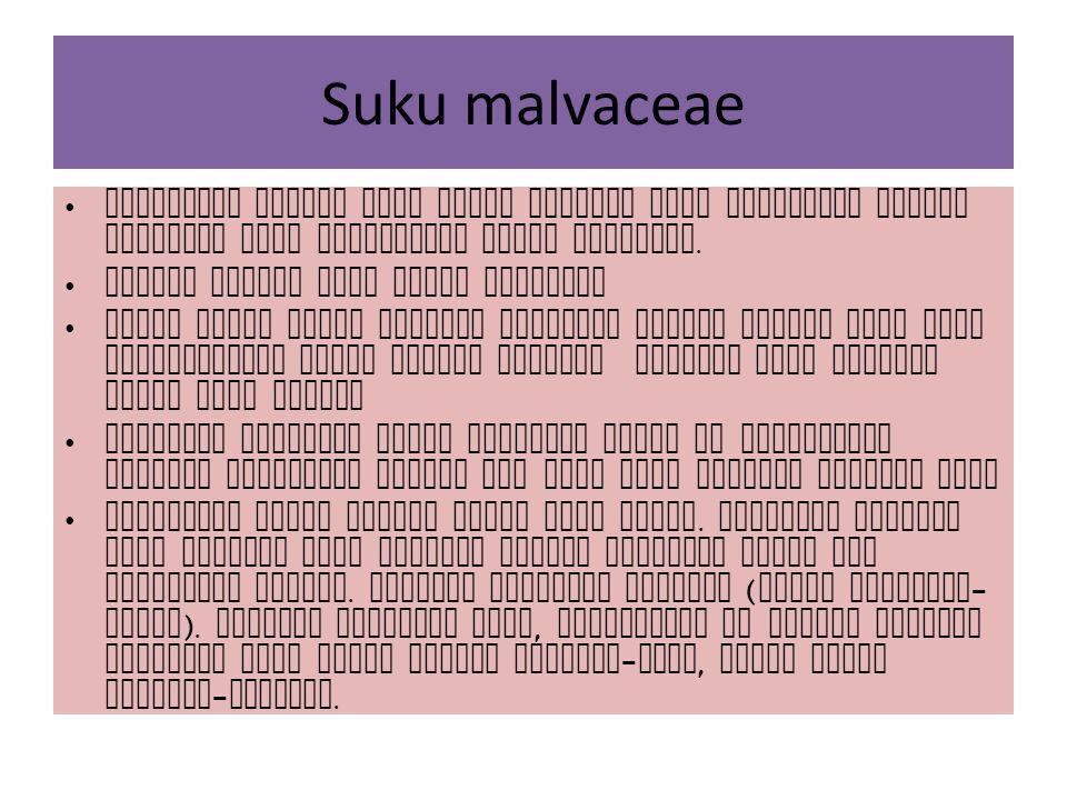 Suku malvaceae Malvaceae adalah suku kapas kapasan yang dicirikan adanya epycalyx pada perbungaan jenis jenisnya. Adanya lendir pada organ tubuhnya Je