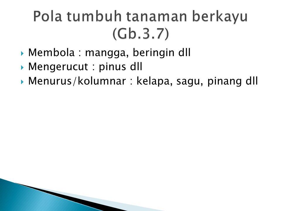  Membola : mangga, beringin dll  Mengerucut : pinus dll  Menurus/kolumnar : kelapa, sagu, pinang dll