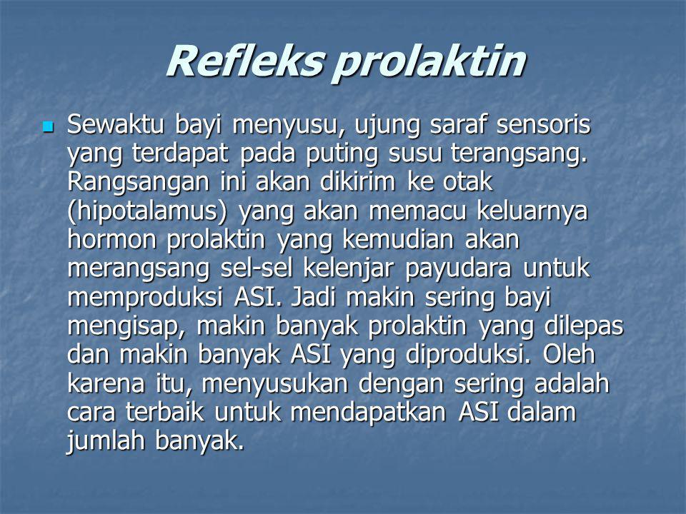 Refleks prolaktin Sewaktu bayi menyusu, ujung saraf sensoris yang terdapat pada puting susu terangsang. Rangsangan ini akan dikirim ke otak (hipotalam