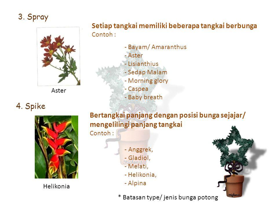 Setiap tangkai memiliki beberapa tangkai berbunga Contoh : 3. Spray - Bayam/ Amaranthus - Aster - Lisianthius - Sedap Malam - Morning glory - Caspea -