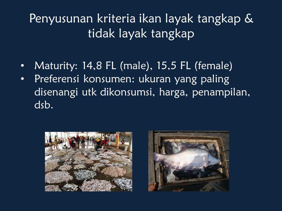 Penyusunan kriteria ikan layak tangkap & tidak layak tangkap Maturity: 14,8 FL (male), 15,5 FL (female) Preferensi konsumen: ukuran yang paling disenangi utk dikonsumsi, harga, penampilan, dsb.