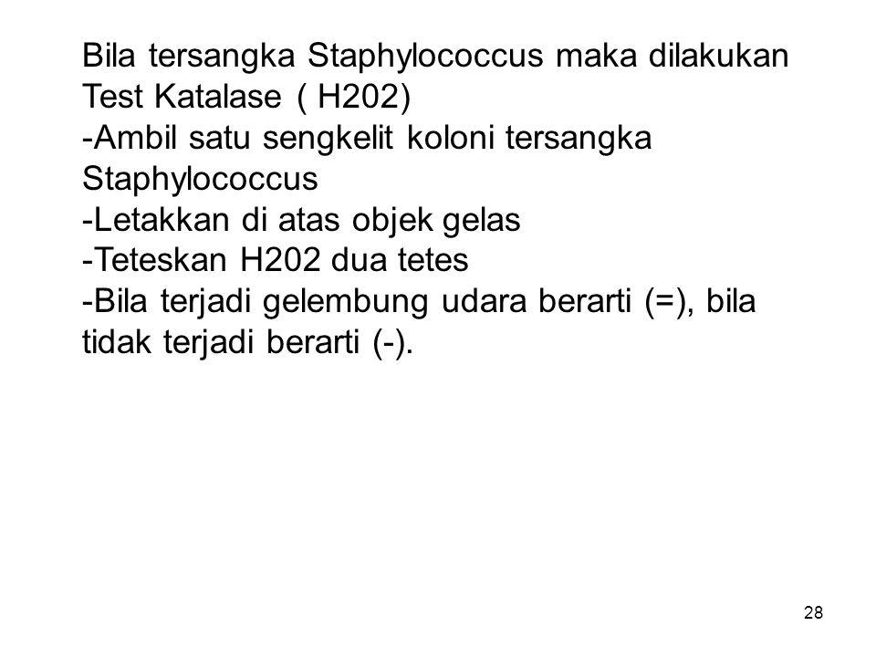28 Bila tersangka Staphylococcus maka dilakukan Test Katalase ( H202) -Ambil satu sengkelit koloni tersangka Staphylococcus -Letakkan di atas objek ge