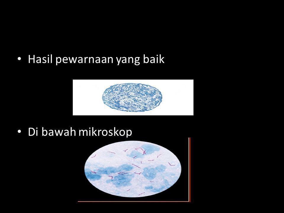 Hasil pewarnaan yang baik Di bawah mikroskop