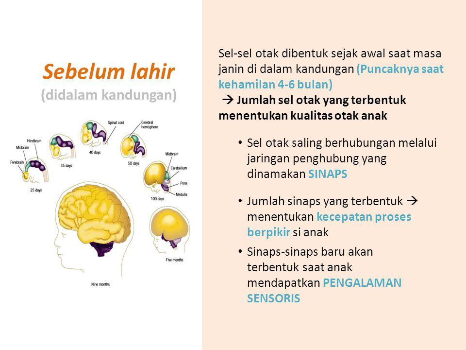 Sebelum lahir (didalam kandungan) Sel-sel otak dibentuk sejak awal saat masa janin di dalam kandungan (Puncaknya saat kehamilan 4-6 bulan)  Jumlah se