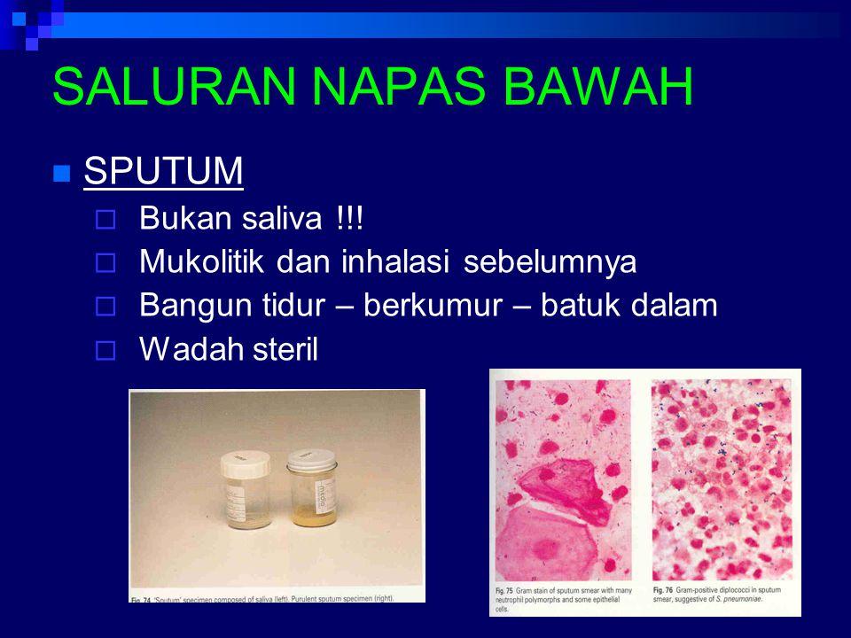 SALURAN NAPAS BAWAH SPUTUM  Bukan saliva !!!  Mukolitik dan inhalasi sebelumnya  Bangun tidur – berkumur – batuk dalam  Wadah steril