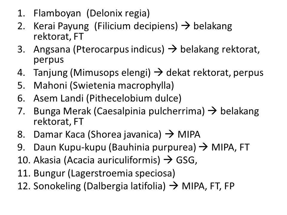 1.Flamboyan (Delonix regia) 2.Kerai Payung (Filicium decipiens)  belakang rektorat, FT 3.Angsana (Pterocarpus indicus)  belakang rektorat, perpus 4.