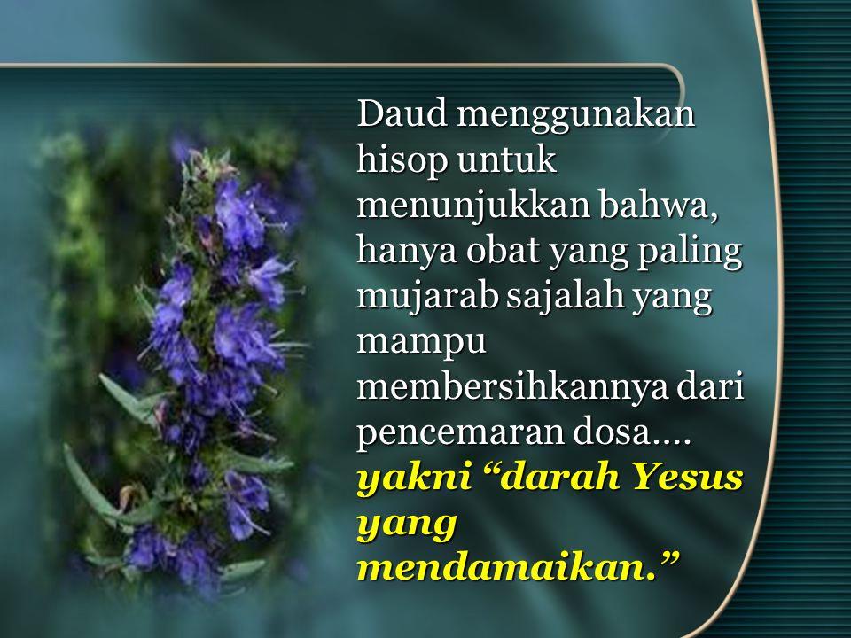 Daud menggunakan hisop untuk menunjukkan bahwa, hanya obat yang paling mujarab sajalah yang mampu membersihkannya dari pencemaran dosa….