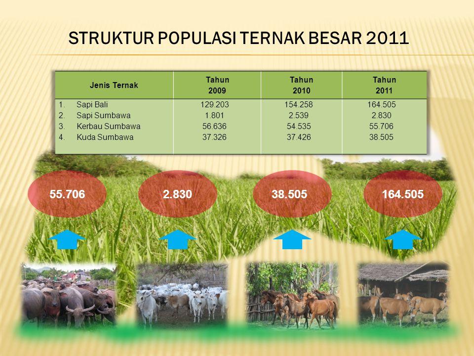 STRUKTUR POPULASI TERNAK BESAR 2011 55.706164.505 38.505 2.830