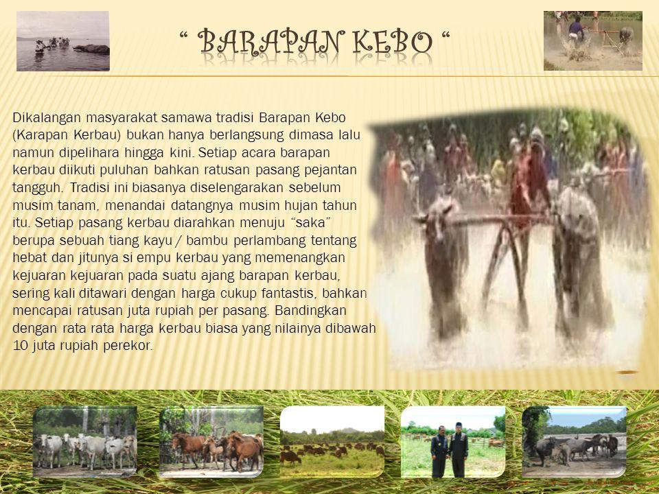 Dikalangan masyarakat samawa tradisi Barapan Kebo (Karapan Kerbau) bukan hanya berlangsung dimasa lalu namun dipelihara hingga kini.