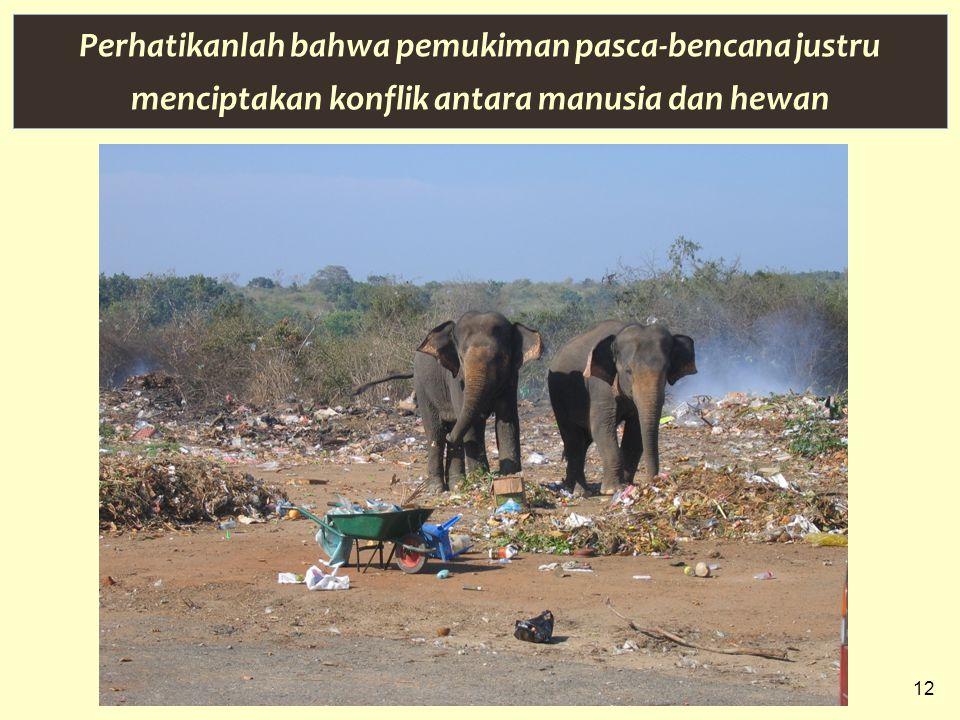 12 Perhatikanlah bahwa pemukiman pasca-bencana justru menciptakan konflik antara manusia dan hewan