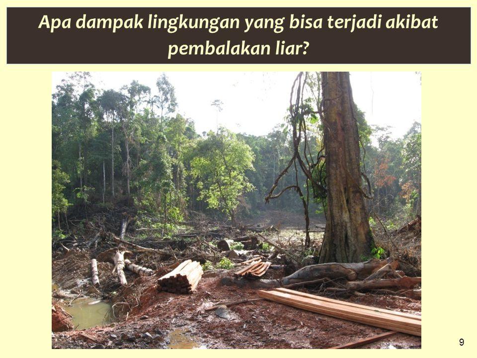 9 Apa dampak lingkungan yang bisa terjadi akibat pembalakan liar