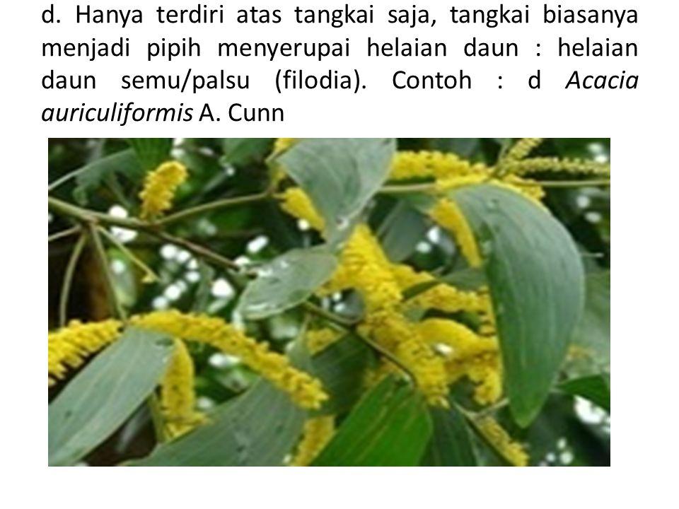 d. Hanya terdiri atas tangkai saja, tangkai biasanya menjadi pipih menyerupai helaian daun : helaian daun semu/palsu (filodia). Contoh : d Acacia auri