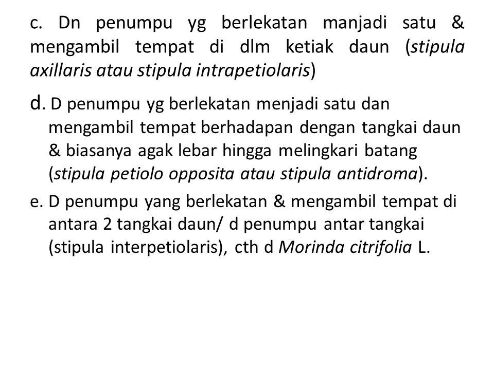 c. Dn penumpu yg berlekatan manjadi satu & mengambil tempat di dlm ketiak daun (stipula axillaris atau stipula intrapetiolaris) d. D penumpu yg berlek