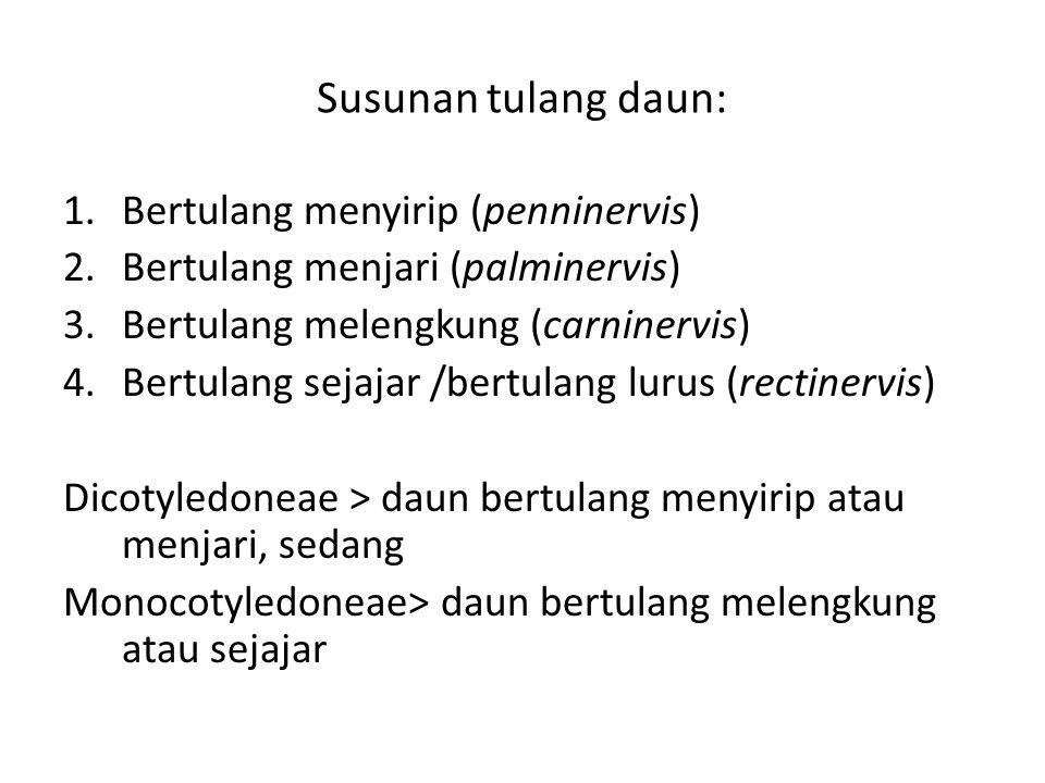 Susunan tulang daun: 1.Bertulang menyirip (penninervis) 2.Bertulang menjari (palminervis) 3.Bertulang melengkung (carninervis) 4.Bertulang sejajar /be