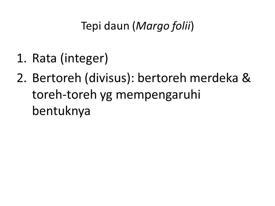Tepi daun (Margo folii) 1.Rata (integer) 2.Bertoreh (divisus): bertoreh merdeka & toreh-toreh yg mempengaruhi bentuknya