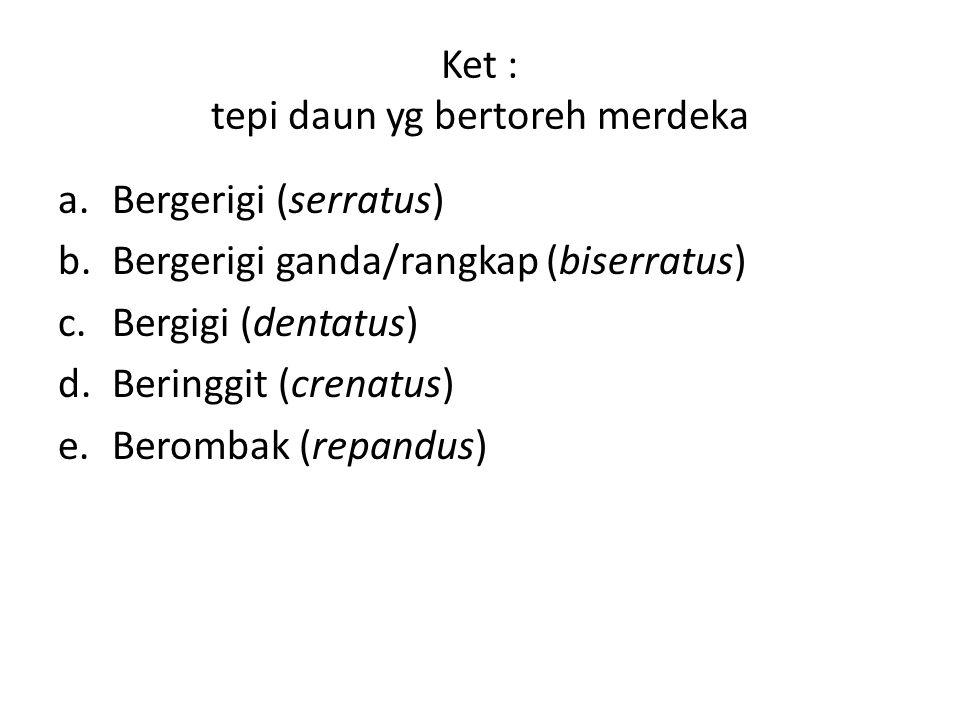 Ket : tepi daun yg bertoreh merdeka a.Bergerigi (serratus) b.Bergerigi ganda/rangkap (biserratus) c.Bergigi (dentatus) d.Beringgit (crenatus) e.Beromb