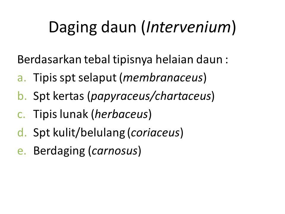 Daging daun (Intervenium) Berdasarkan tebal tipisnya helaian daun : a.Tipis spt selaput (membranaceus) b.Spt kertas (papyraceus/chartaceus) c.Tipis lu