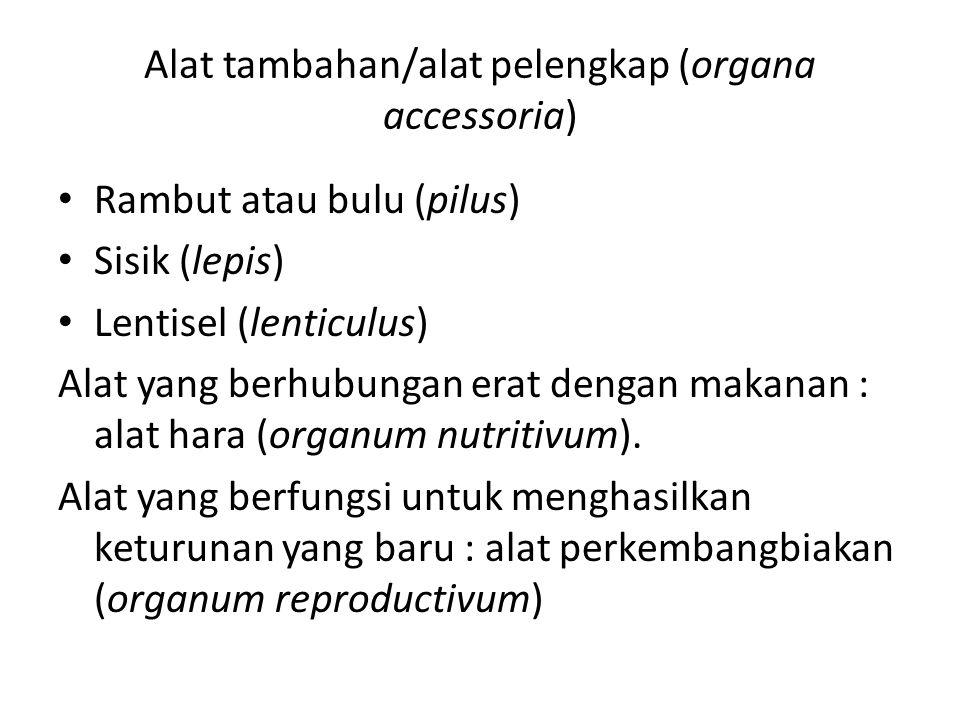 Alat tambahan/alat pelengkap (organa accessoria) Rambut atau bulu (pilus) Sisik (lepis) Lentisel (lenticulus) Alat yang berhubungan erat dengan makana
