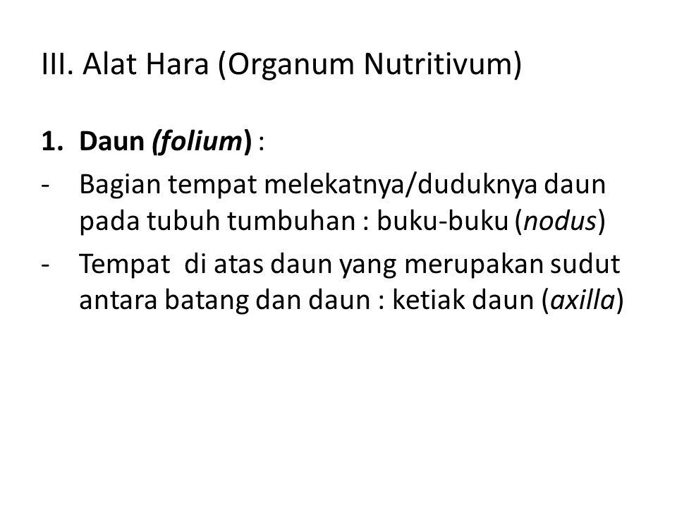 III. Alat Hara (Organum Nutritivum) 1.Daun (folium) : -Bagian tempat melekatnya/duduknya daun pada tubuh tumbuhan : buku-buku (nodus) -Tempat di atas