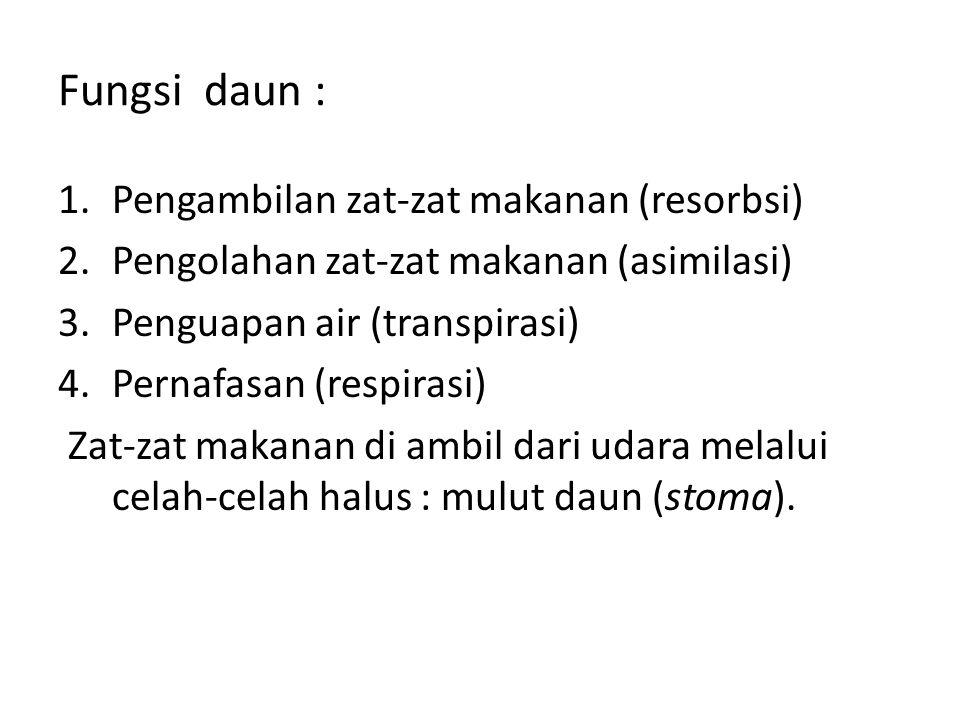 Fungsi daun : 1.Pengambilan zat-zat makanan (resorbsi) 2.Pengolahan zat-zat makanan (asimilasi) 3.Penguapan air (transpirasi) 4.Pernafasan (respirasi)