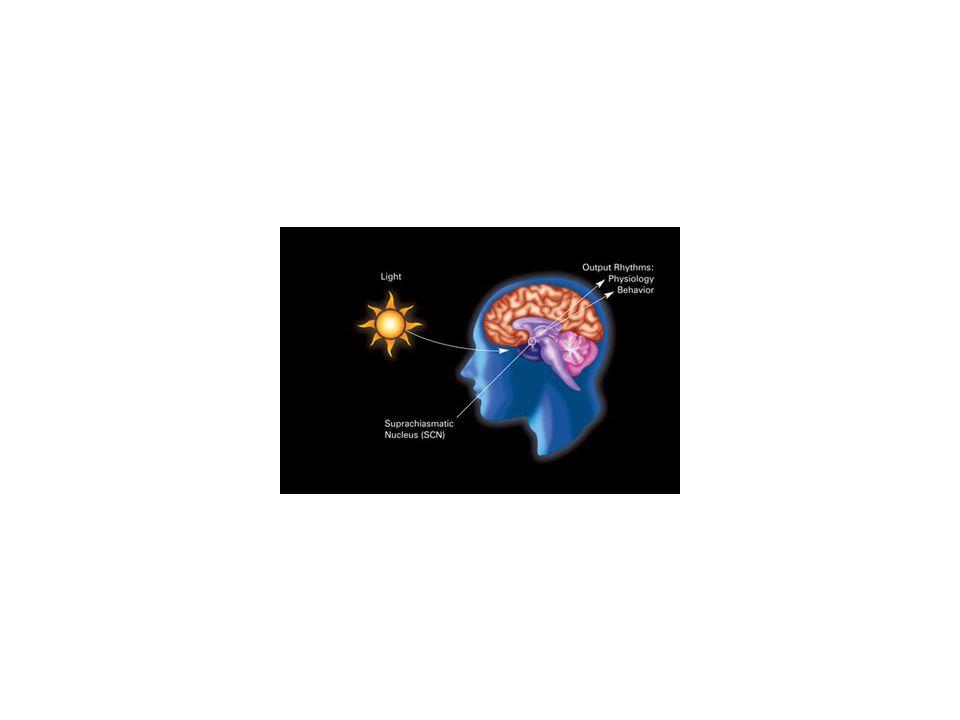 GANGGUAN TIDUR PRIMER Dyssomnia (amount,quality, timing) Parasomnia (perilaku ab(n), fisiologi ab (n) ),berkaitandengan tidur, tahap tidur spesifik, transisi bangun-tidur
