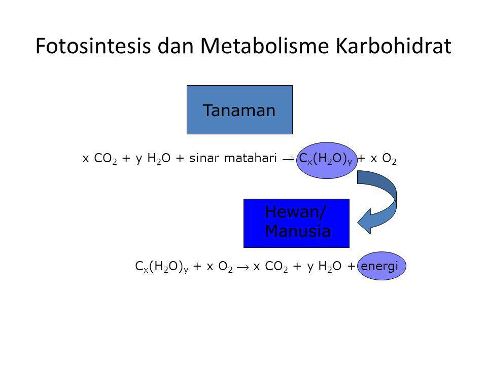Fotosintesis dan Metabolisme Karbohidrat Tanaman x CO 2 + y H 2 O + sinar matahari  C x (H 2 O) y + x O 2 Hewan/ Manusia C x (H 2 O) y + x O 2  x CO