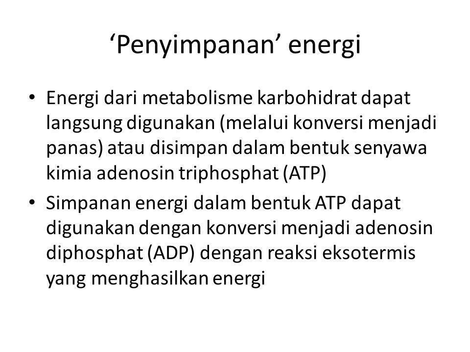 'Penyimpanan' energi Energi dari metabolisme karbohidrat dapat langsung digunakan (melalui konversi menjadi panas) atau disimpan dalam bentuk senyawa