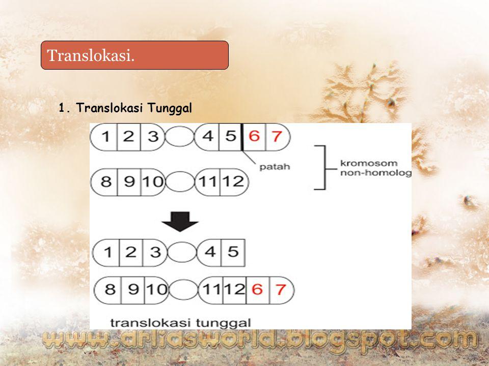 Duplikasi Translokasi. 1. Translokasi Tunggal