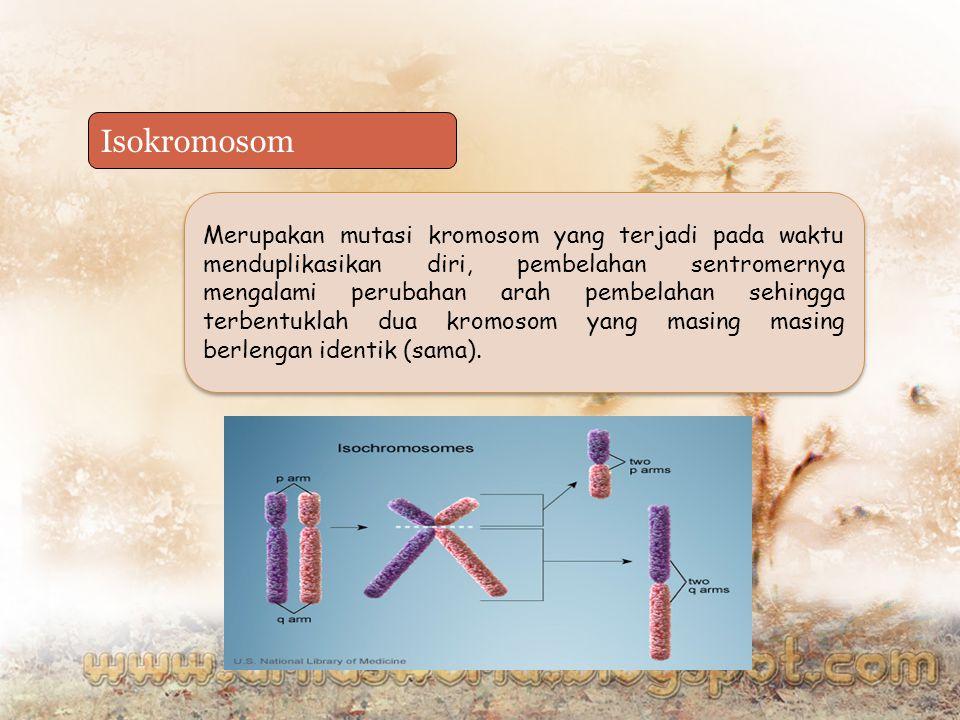 Isokromosom Merupakan mutasi kromosom yang terjadi pada waktu menduplikasikan diri, pembelahan sentromernya mengalami perubahan arah pembelahan sehing