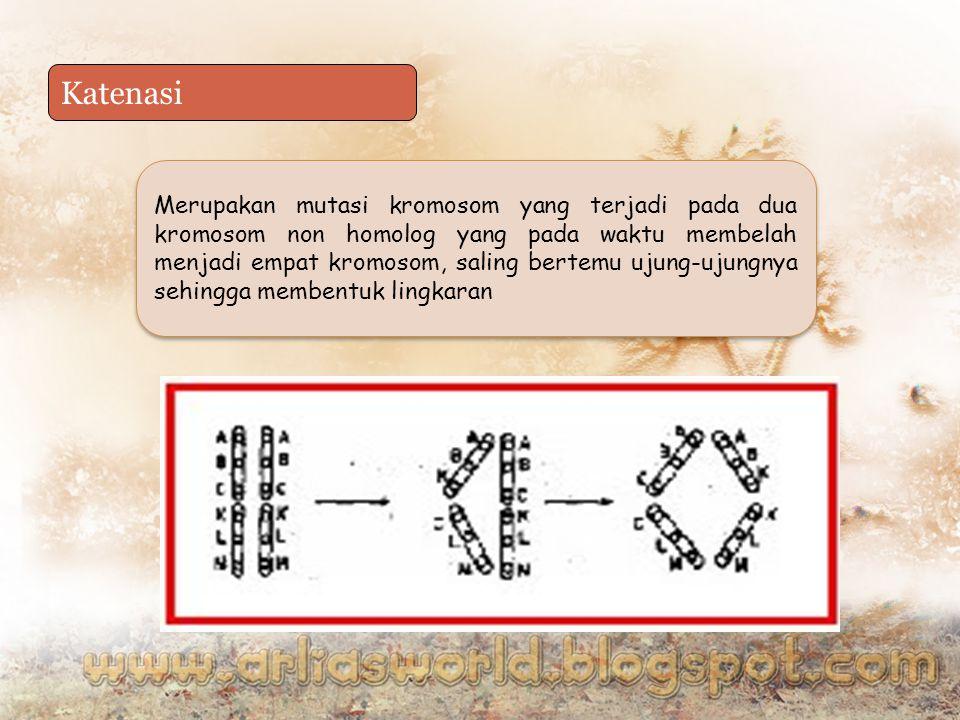 Katenasi Merupakan mutasi kromosom yang terjadi pada dua kromosom non homolog yang pada waktu membelah menjadi empat kromosom, saling bertemu ujung-ujungnya sehingga membentuk lingkaran