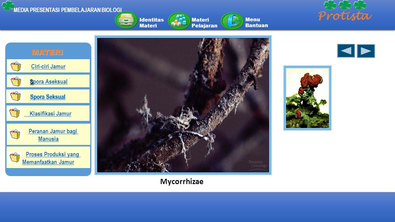 MEDIA PRESENTASI PEMBELAJARAN BIOLOGI Protista Identitas Materi Materi Pelajaran Menu Bantuan Mycorrhizae MATERI Ciri-ciri Jamur S Spora Aseksual Klas