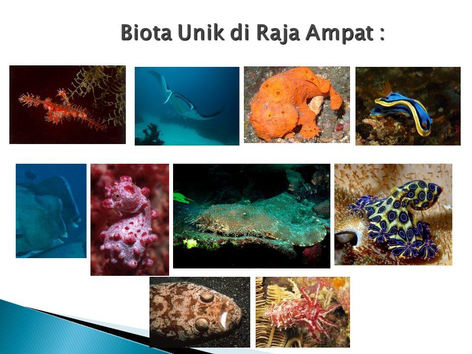 Habitat yang unik : Terumbu karang tepi, penghalang, taka, laguna dan cincin Mangrove, lamun, pantai berpasir laut yang dalam, selat sempit dan dalam KEANEKARAGAMAN HAYATI