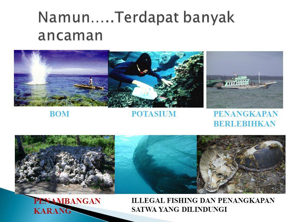 POTASIUMBOM ILLEGAL FISHING DAN PENANGKAPAN SATWA YANG DILINDUNGI PENANGKAPAN BERLEBIHKAN PENAMBANGAN KARANG