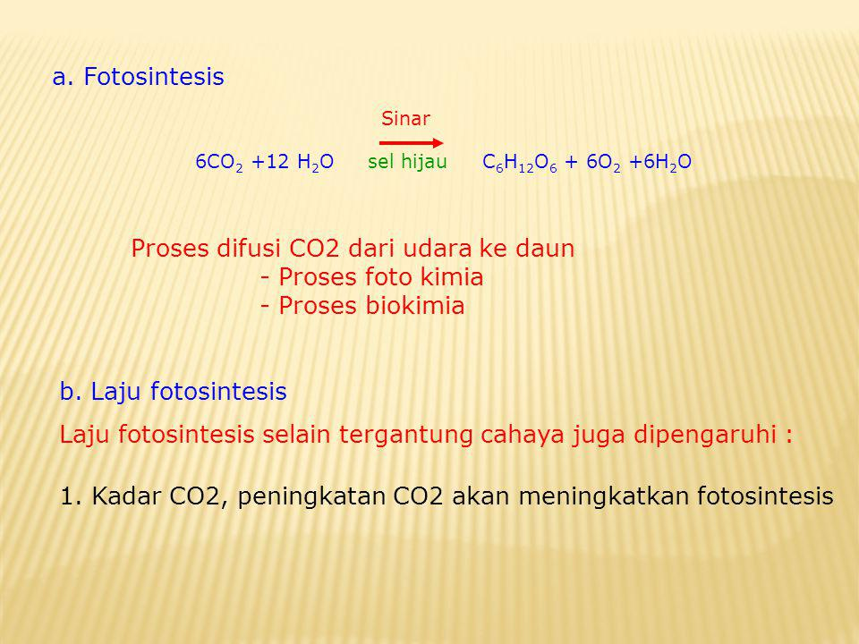 a. Fotosintesis Sinar 6CO 2 +12 H 2 O sel hijau C 6 H 12 O 6 + 6O 2 +6H 2 O Proses difusi CO2 dari udara ke daun - Proses foto kimia - Proses biokimia