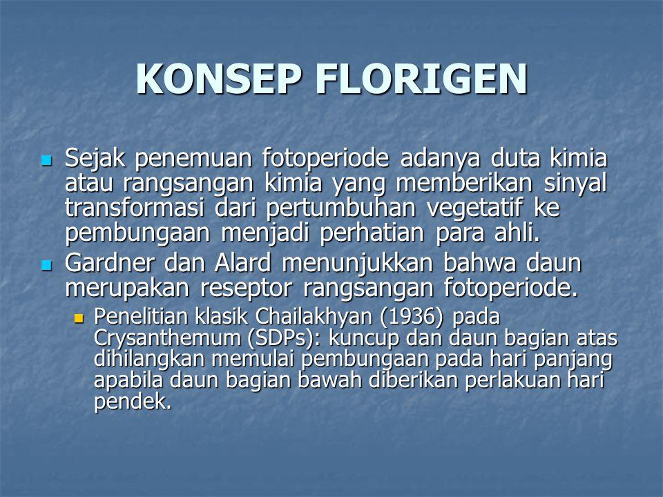 KONSEP FLORIGEN Sejak penemuan fotoperiode adanya duta kimia atau rangsangan kimia yang memberikan sinyal transformasi dari pertumbuhan vegetatif ke pembungaan menjadi perhatian para ahli.