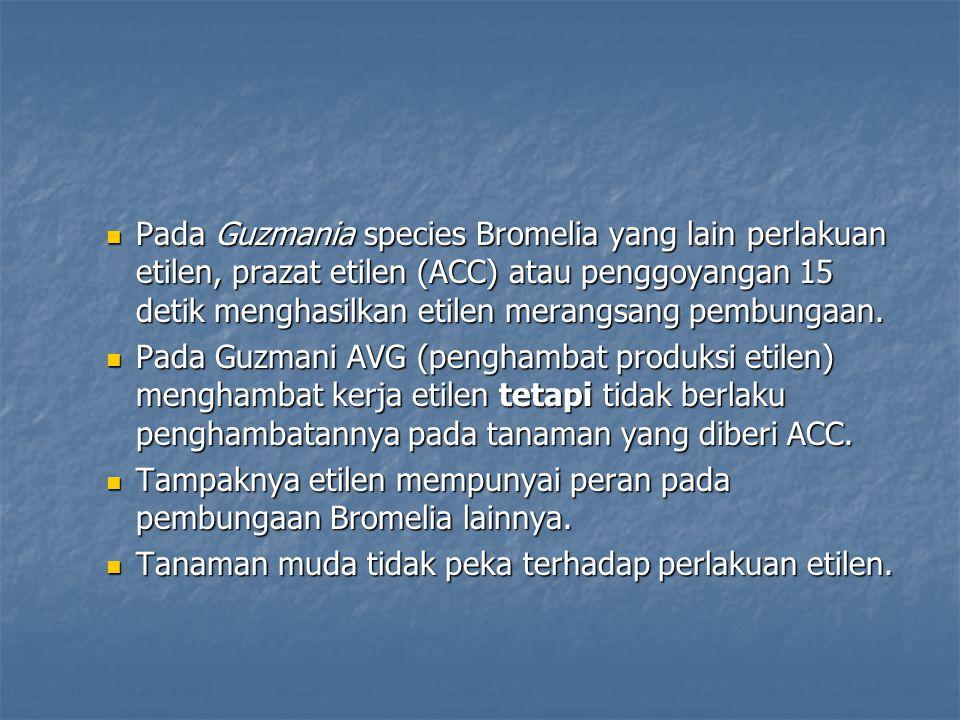 Pada Guzmania species Bromelia yang lain perlakuan etilen, prazat etilen (ACC) atau penggoyangan 15 detik menghasilkan etilen merangsang pembungaan. P