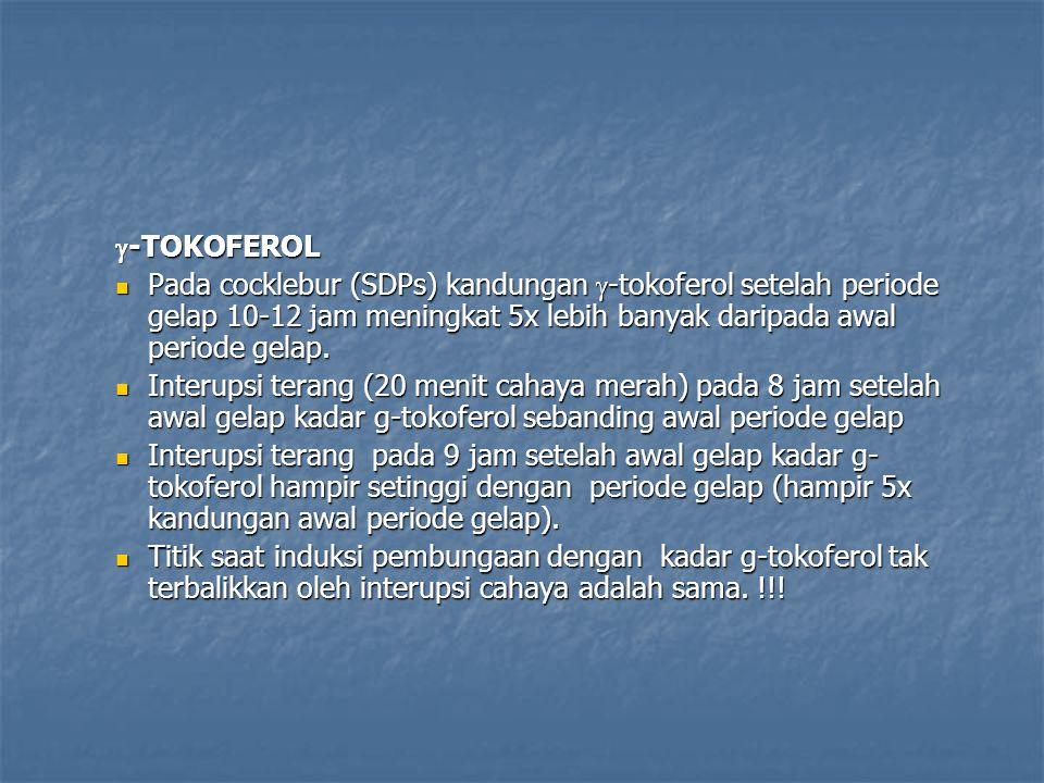  -TOKOFEROL Pada cocklebur (SDPs) kandungan  -tokoferol setelah periode gelap 10-12 jam meningkat 5x lebih banyak daripada awal periode gelap.