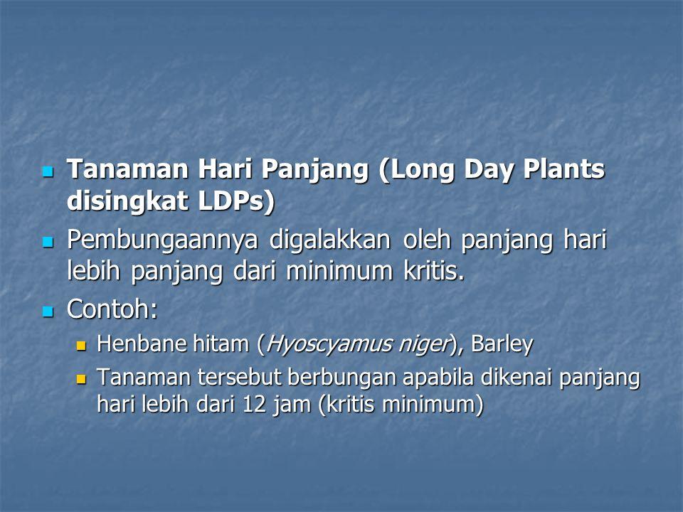 Tanaman Hari Panjang (Long Day Plants disingkat LDPs) Tanaman Hari Panjang (Long Day Plants disingkat LDPs) Pembungaannya digalakkan oleh panjang hari