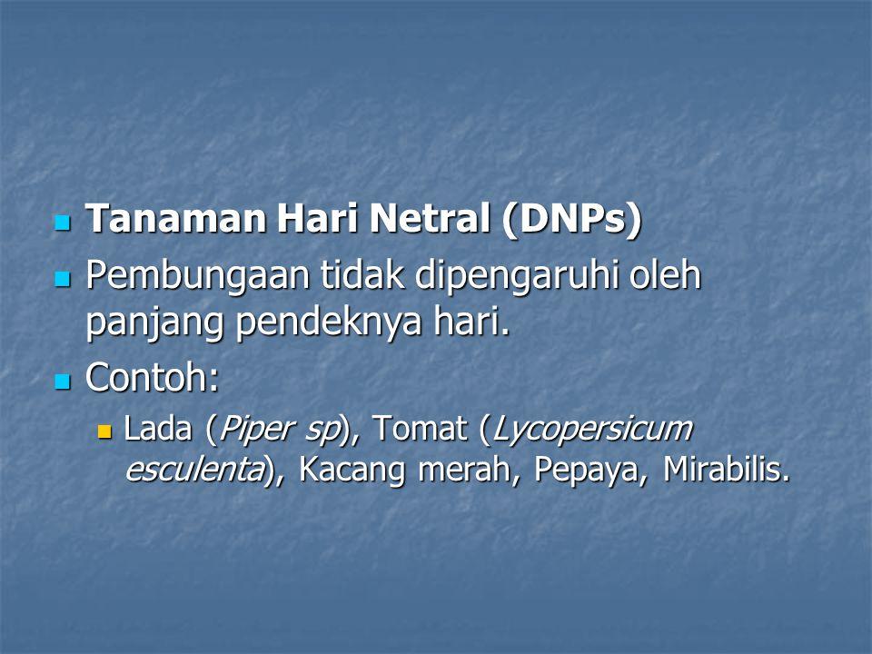 Tanaman Hari Netral (DNPs) Tanaman Hari Netral (DNPs) Pembungaan tidak dipengaruhi oleh panjang pendeknya hari. Pembungaan tidak dipengaruhi oleh panj