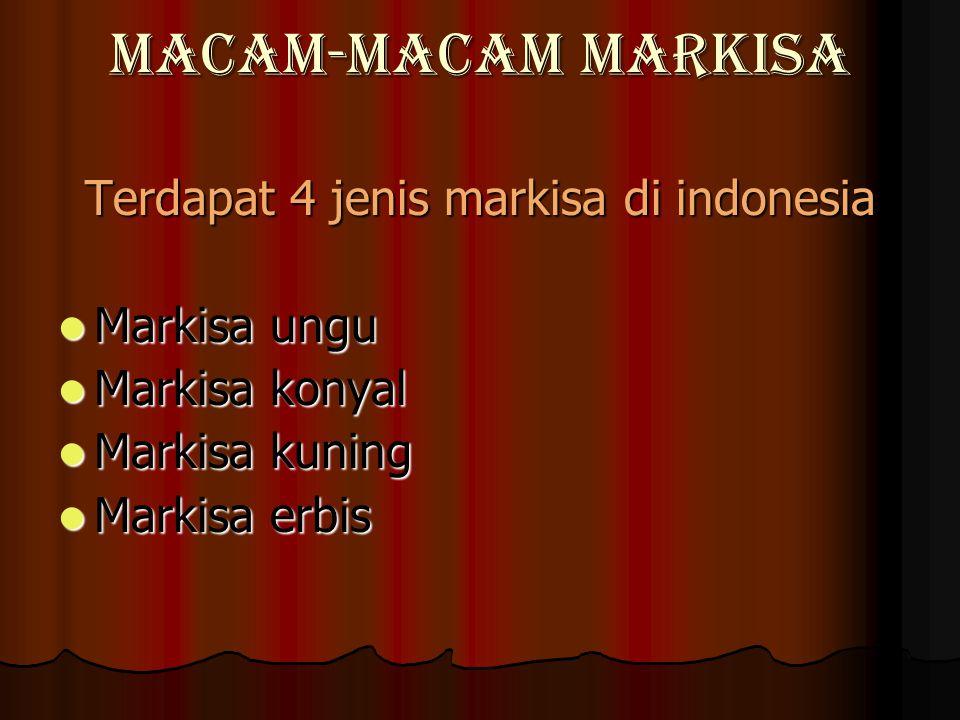 Macam-Macam Markisa Terdapat 4 jenis markisa di indonesia Markisa ungu Markisa ungu Markisa konyal Markisa konyal Markisa kuning Markisa kuning Markisa erbis Markisa erbis