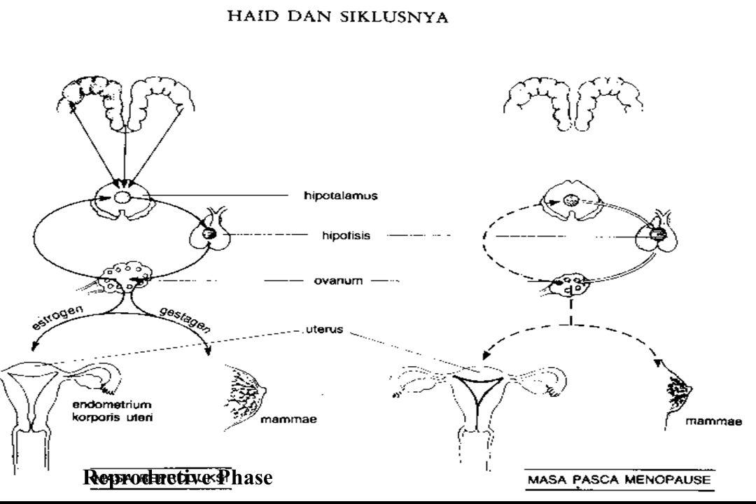 TERMINOLOGI Menoragi / hipermenore >< Hipomenore Polimenore > 35 hari ) Metroragi, Menometroragi : Perdarahan antara 2 haid